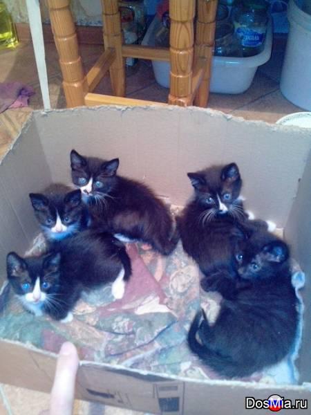Котята ищут свою семью