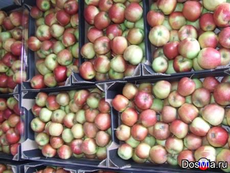Свежие яблоки красных и зеленых сортов высокого качества