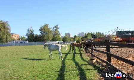 Конно-спортивный комплекс предлагает постой лошадей в теплой конюшни