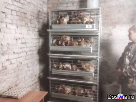 Оборудования для домашнего птицеводства