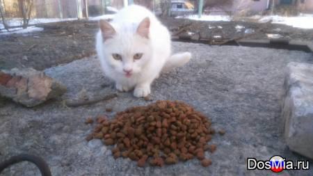 Очаровательный белоснежный котик ищет дом и любящих хозяев