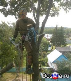 Удалить деревья в Наро-Фоминском районе