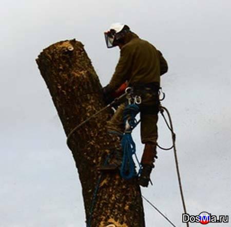 Спиливание деревьев, удаление пней в Купавне.