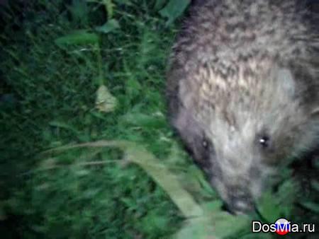 Ёжик не чихнул - The hedgehog didn't sneeze