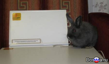 Инфракрасные обогреватели для крольчатников и птичников