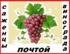 Саженцы винограда 2-х летки 117 сортов-новинок от производителя