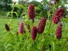 Семена дикорастущих трав