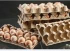 Линия по производству упаковки для яиц