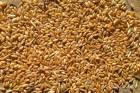 Реализуем пшеницу 3, 4, 5 класса, ГОСТ.